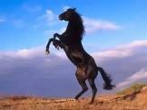 你是一匹千里马